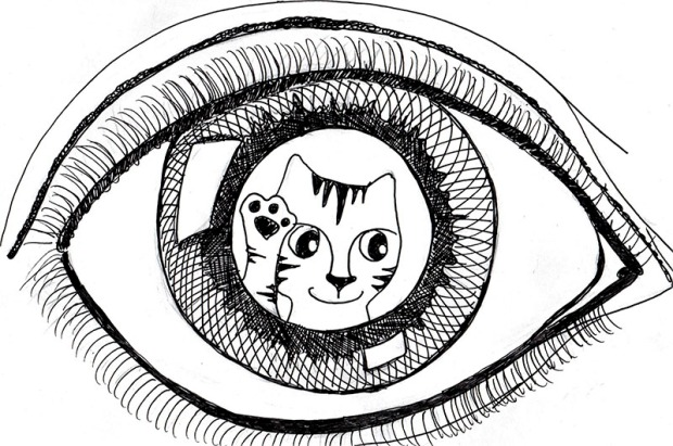 cartoon art cat Link Escher Eye pen ink drawing
