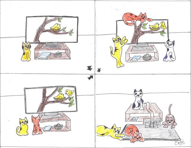 sunday cat tv